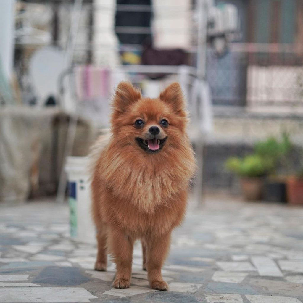 GauravZone Dog Images/Photos/Wallpaper -Source: instagram.com, StarWikiBio